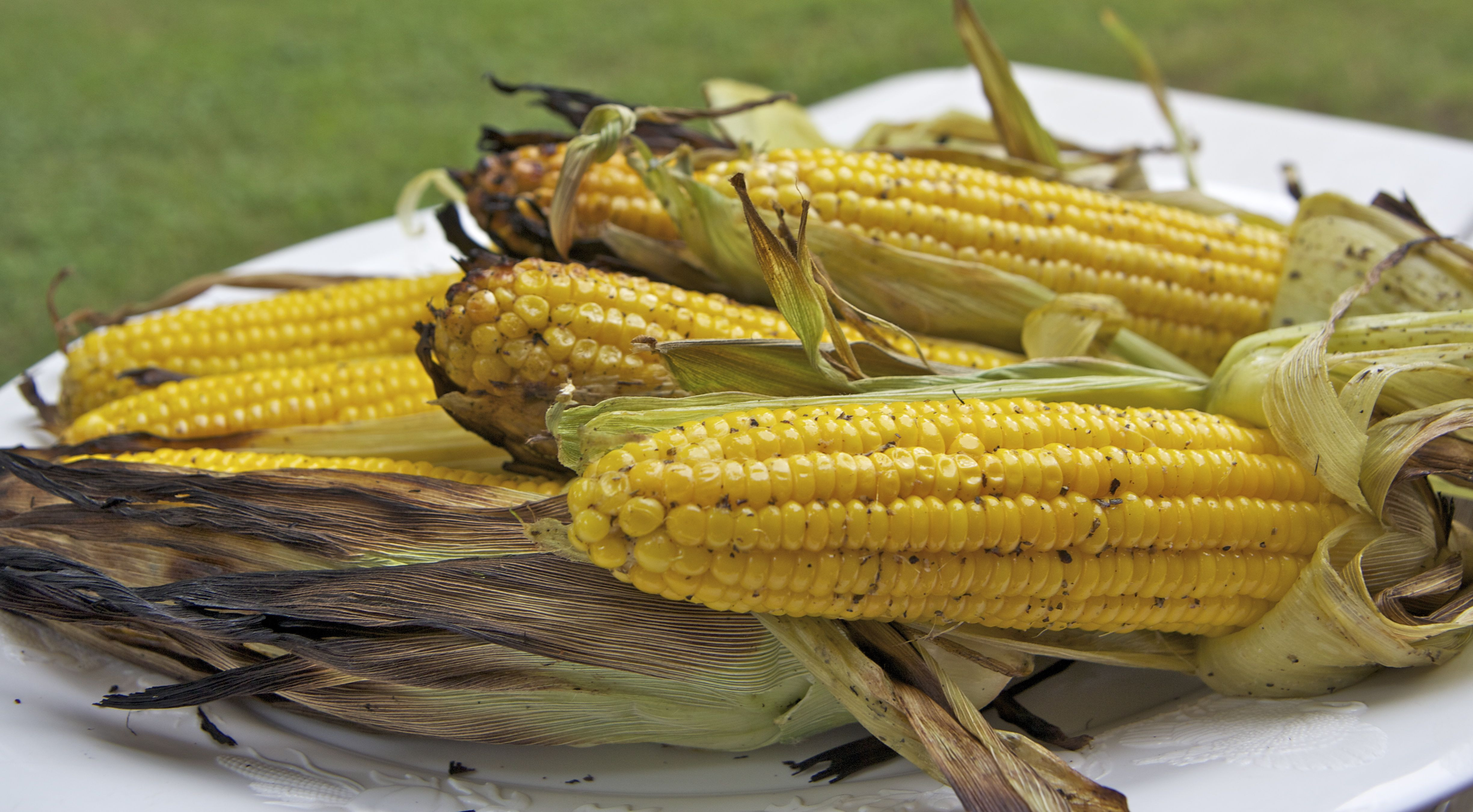 Corn On Cob On Grill  grilled corn on the cob without husks in foil