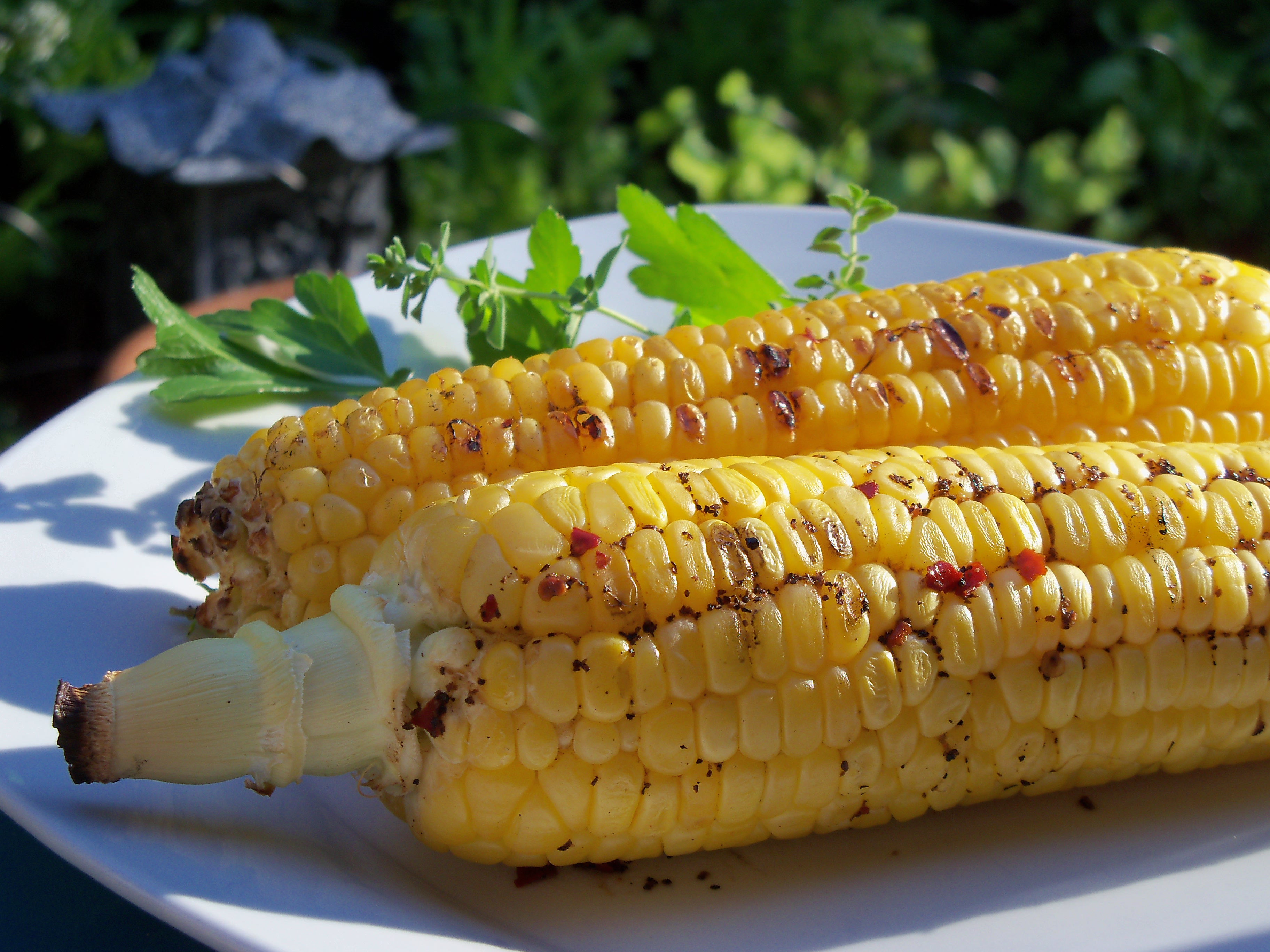 Corn On Cob On Grill  Grilled Corn on the Cob Tailgate Grilling