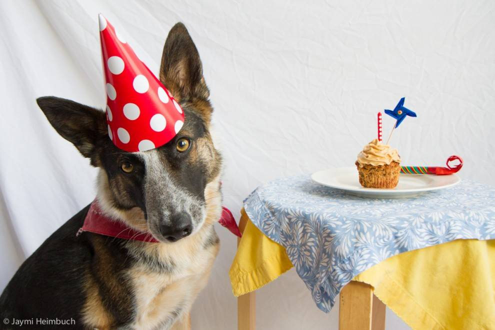 Dog Birthday Cake  How to make a dog birthday cake