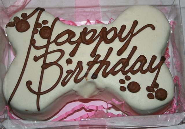 Dog Birthday Cake  Perfect dog birthday cakes for your pet to pamper with