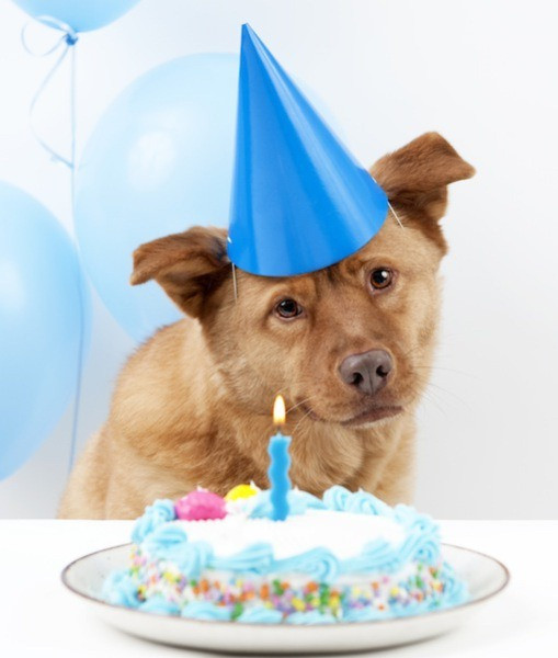 Dog Birthday Cake  The Ultimate Guide to Dog Birthday Cake Recipes