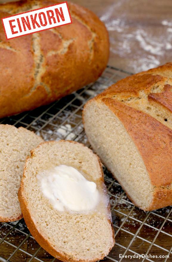 Einkorn Bread Recipe  Einkorn Whole Wheat Dutch Oven Bread Recipe Video