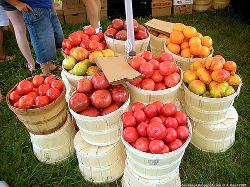 Grainger County Tomato Festival  Grainger County Tomato Festival