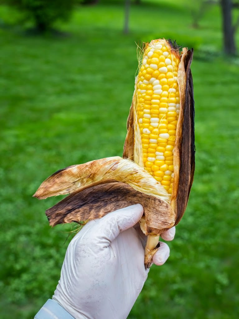 Grill Corn In Husk  Grilled In The Husk Corn DadCooksDinner