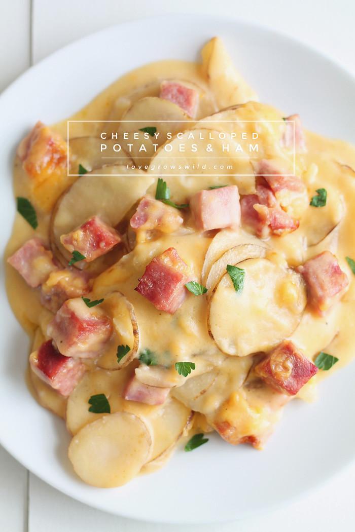 Ham And Potato Recipes  Cheesy Scalloped Potatoes with Ham Love Grows Wild