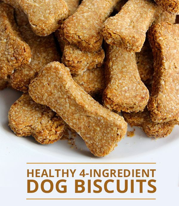 Healthy Biscuit Recipe  1000 images about Doxie Love on Pinterest