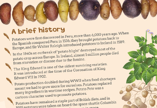 History Of The Potato  All About Potatoes resources for 16 19 students