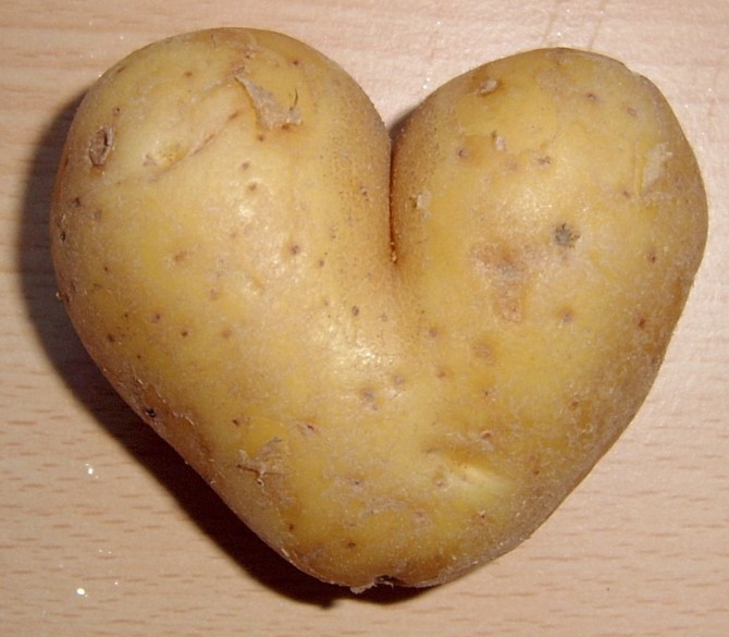 History Of The Potato  Nothing Is Boring 1 The Spud – Sick Chirpse