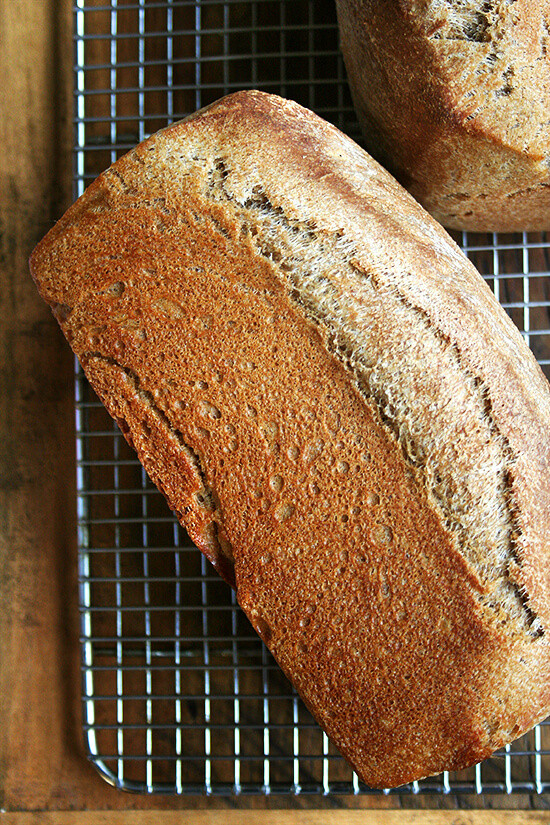 Honey Whole Wheat Bread Recipe  Whole Wheat Honey Bread Recipe — Dishmaps