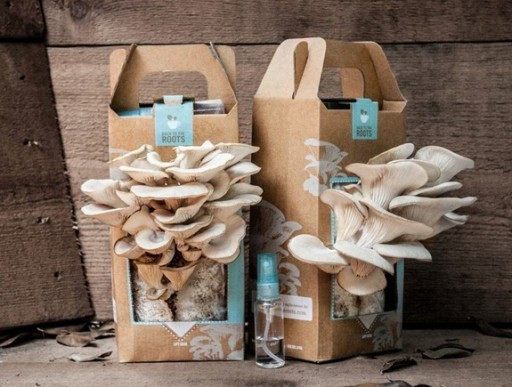 How To Grow Oyster Mushrooms  how to grow your own oyster mushrooms in used coffee