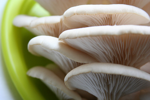 How To Grow Oyster Mushrooms  Growing Mushrooms in Coffee Grounds