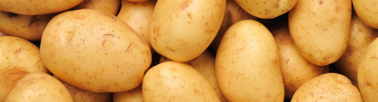 How To Spell Potato  Spelling potato potatoe