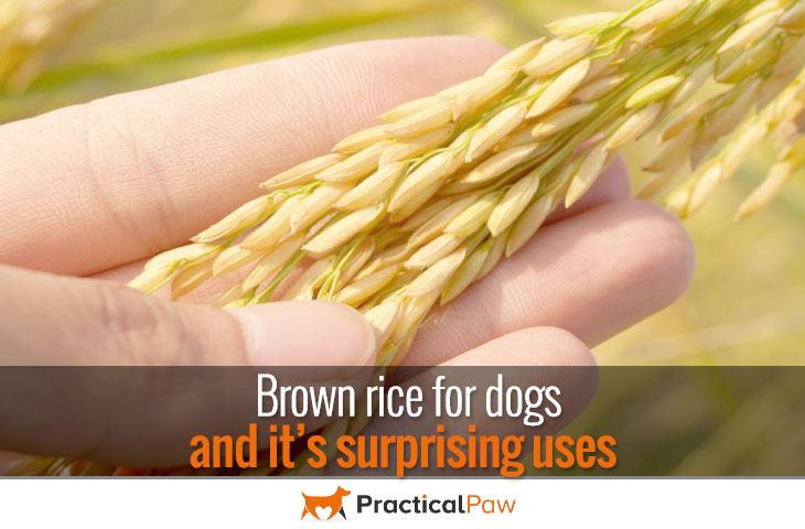 Is Brown Rice Good For Dogs  Brown rice for dogs and it's surprising uses Practical