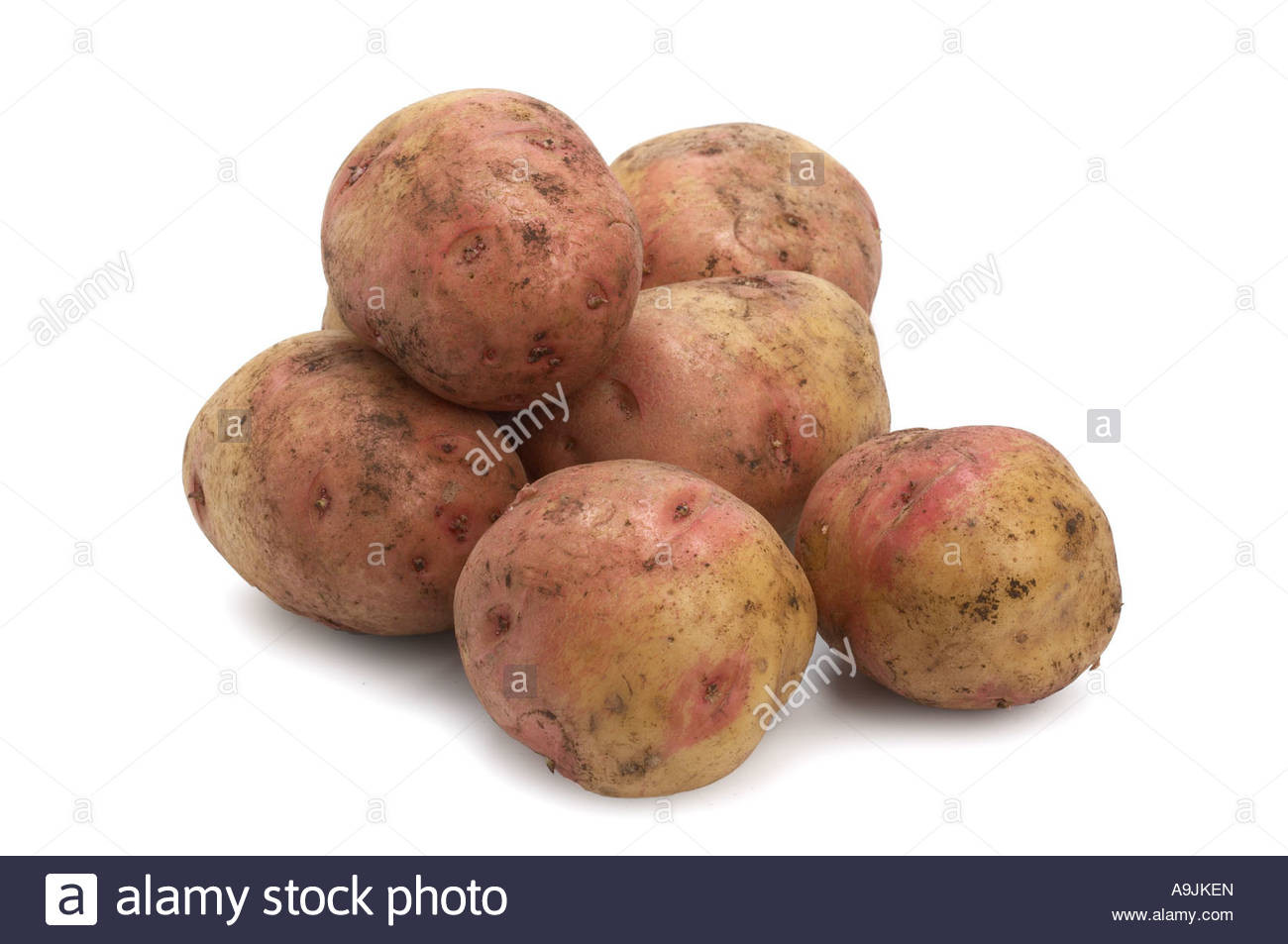King Edward Potato  King Edward Potatoes Stock Royalty Free Image
