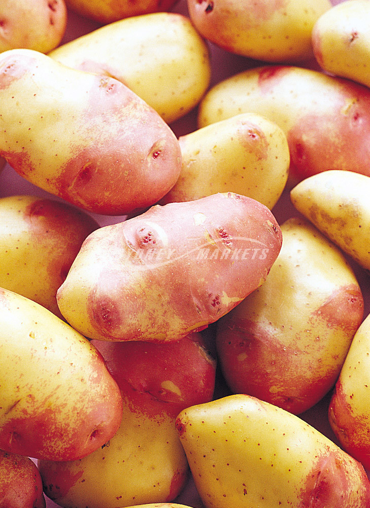 King Edward Potato  Sydney Markets Potatoes King Edward
