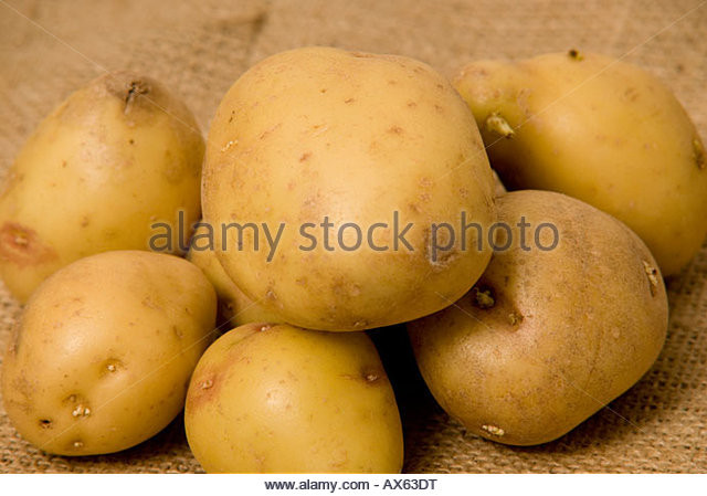 King Edward Potato  Edward Edwards Stock s & Edward Edwards Stock