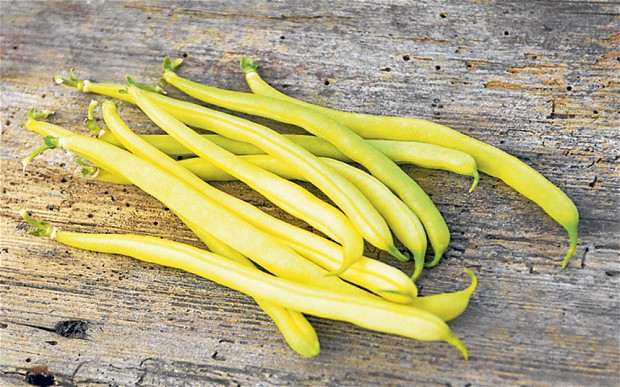 Lean Green Bean  How to grow a lean green French bean Telegraph