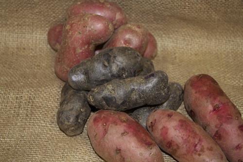 Maine Potato Lady  Fingerling Potatoes