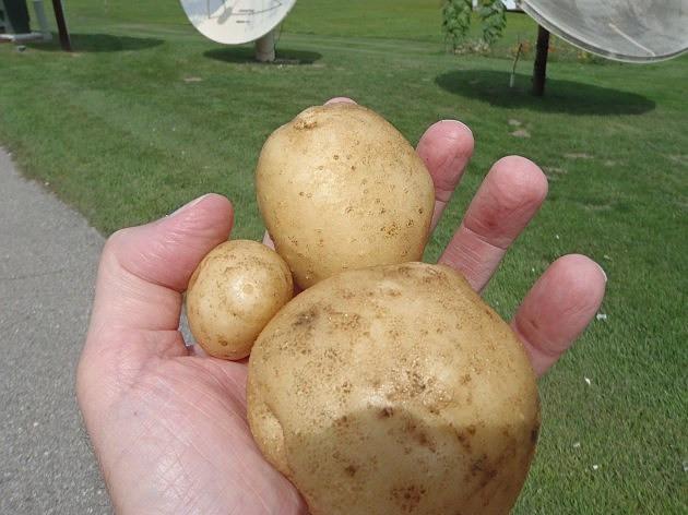 Munger Potato Festival  Munger Potato Festival This Weekend