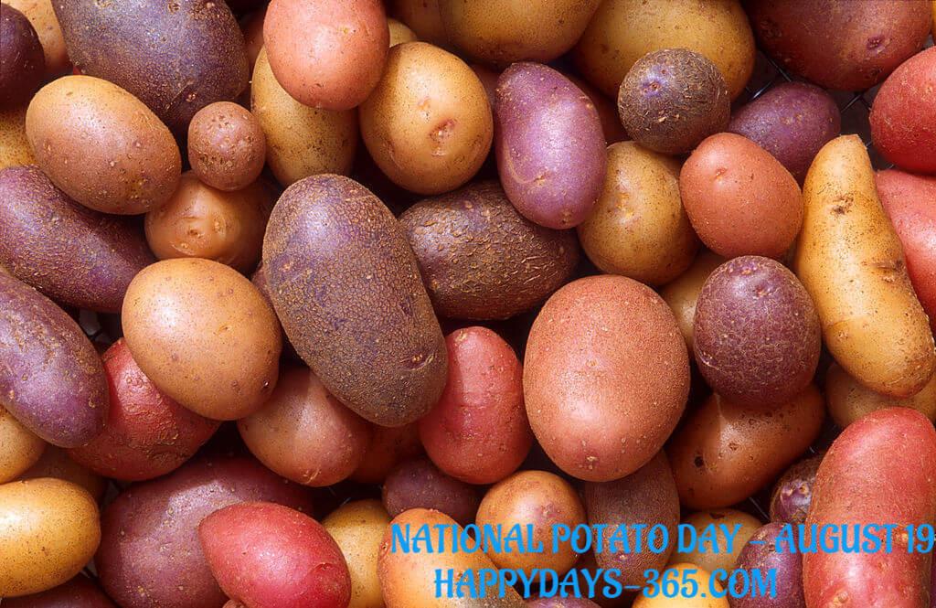 National Potato Day  National Potato Day August 19 2018