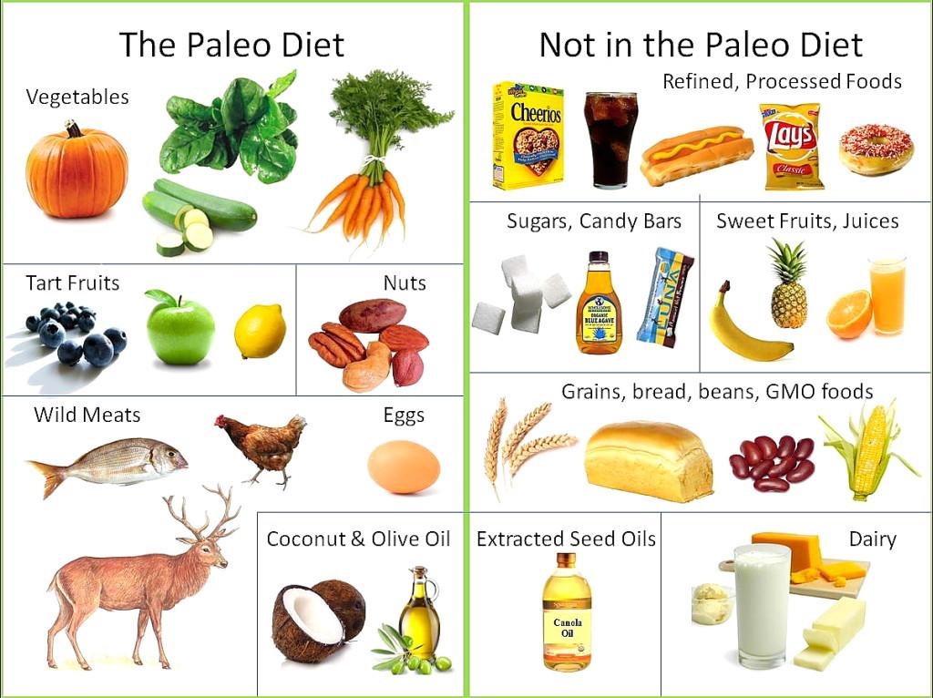 Paleo Diet Wiki  Popular Effective Diets for Sleep Apnea CPAP Therapy
