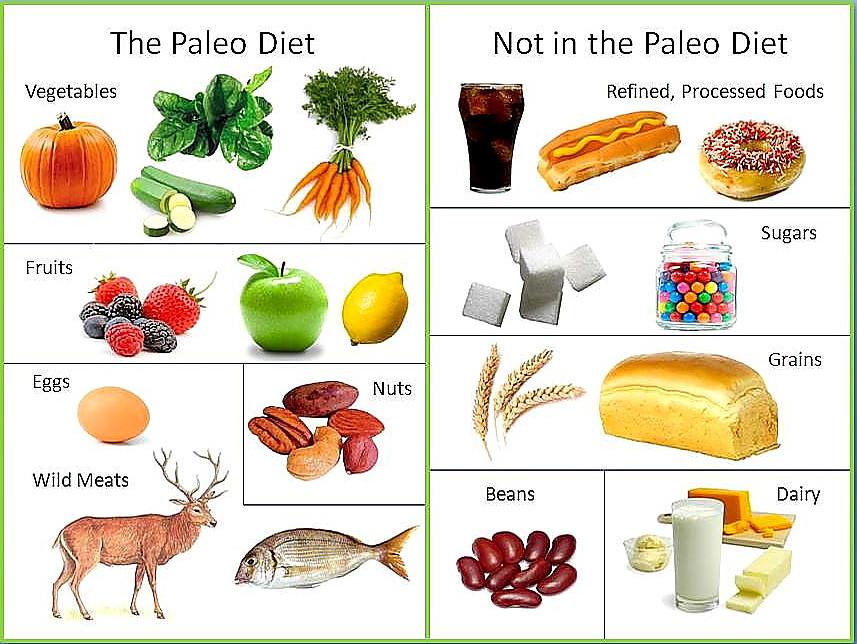 Paleo Diet Wiki  Paleo Diet