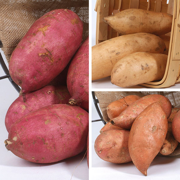 Potato A Vegetable  Sweet Potato Collection from Mr Fothergill s Seeds and Plants