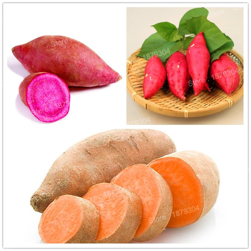 Potato A Vegetable  100pcs bag sweet potato seeds Ve ables Seeds fresh food