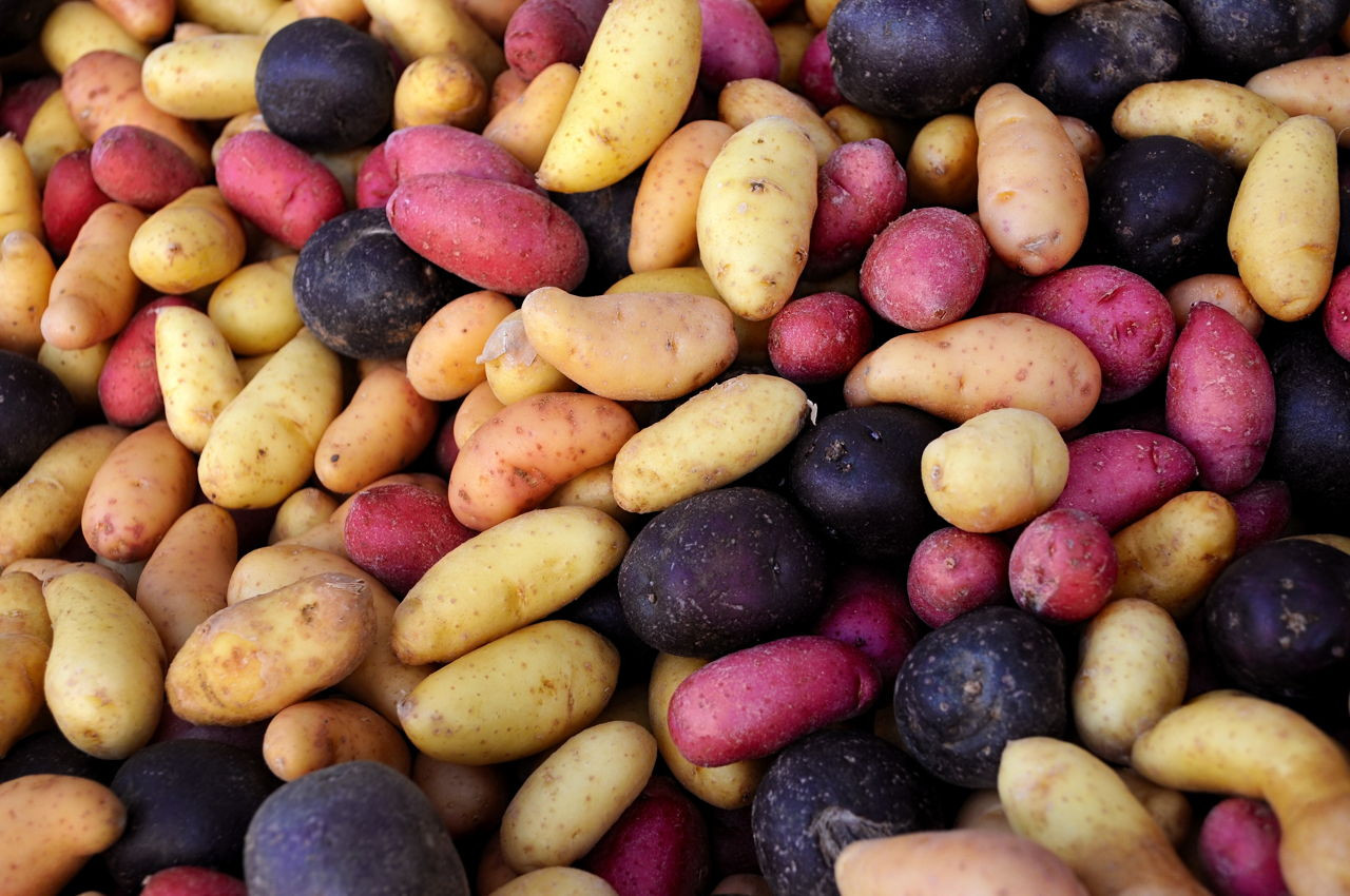 Potato Carbohydrate Amount  Carbohydrates Types and Properties