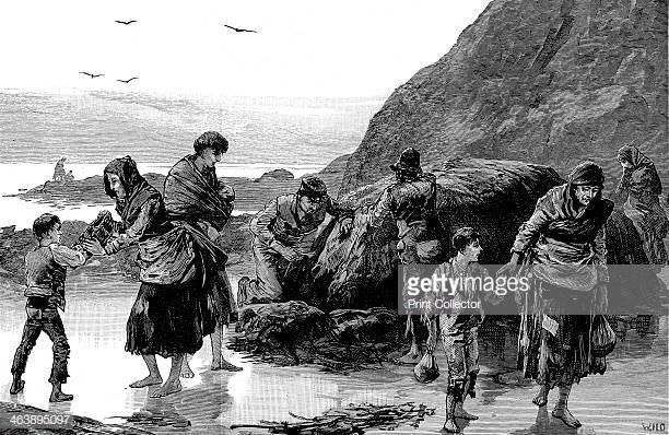 Potato Famine Ireland  Famine Stock s and