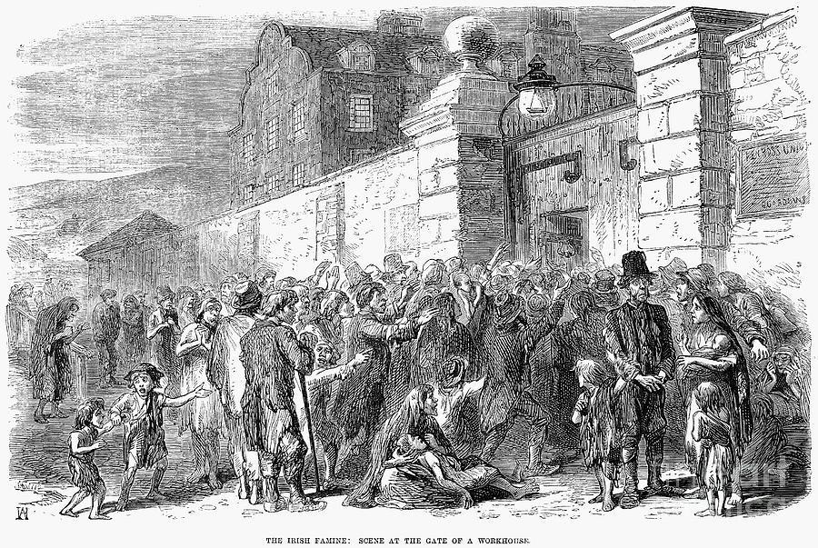 Potato Famine Ireland  Irish Potato Famine 1846 7 by Granger