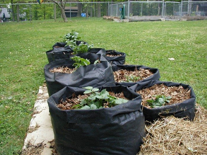 Potato Grow Bags  Make your own potato grow bags