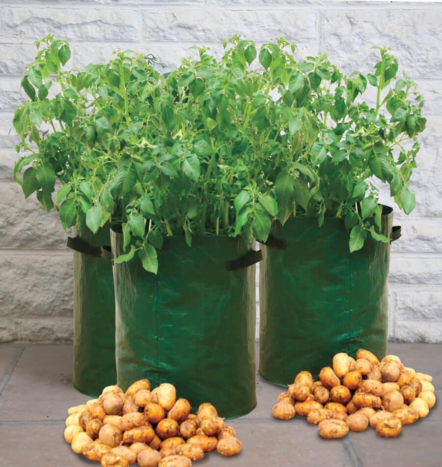 Potato Grow Bags  Potato Grow Bags