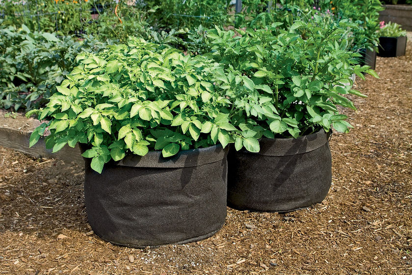 Potato Grow Bags  Growing Potatoes in Bags 2 Little Supeheroes2 Little