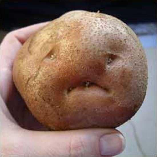 Potato With A Face  allkpop Meme Center