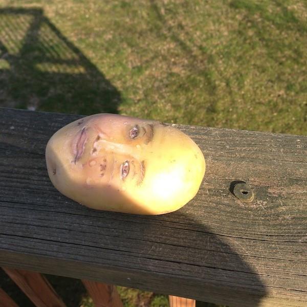 Potato With A Face  Stan Faryna Archives soulati
