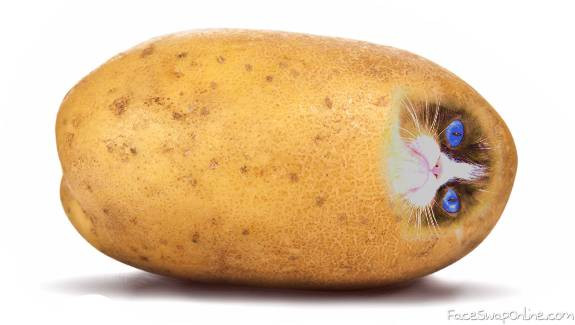 Potato With A Face  Cat