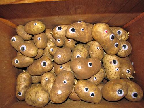 Potato With Eyes  Potato eyes
