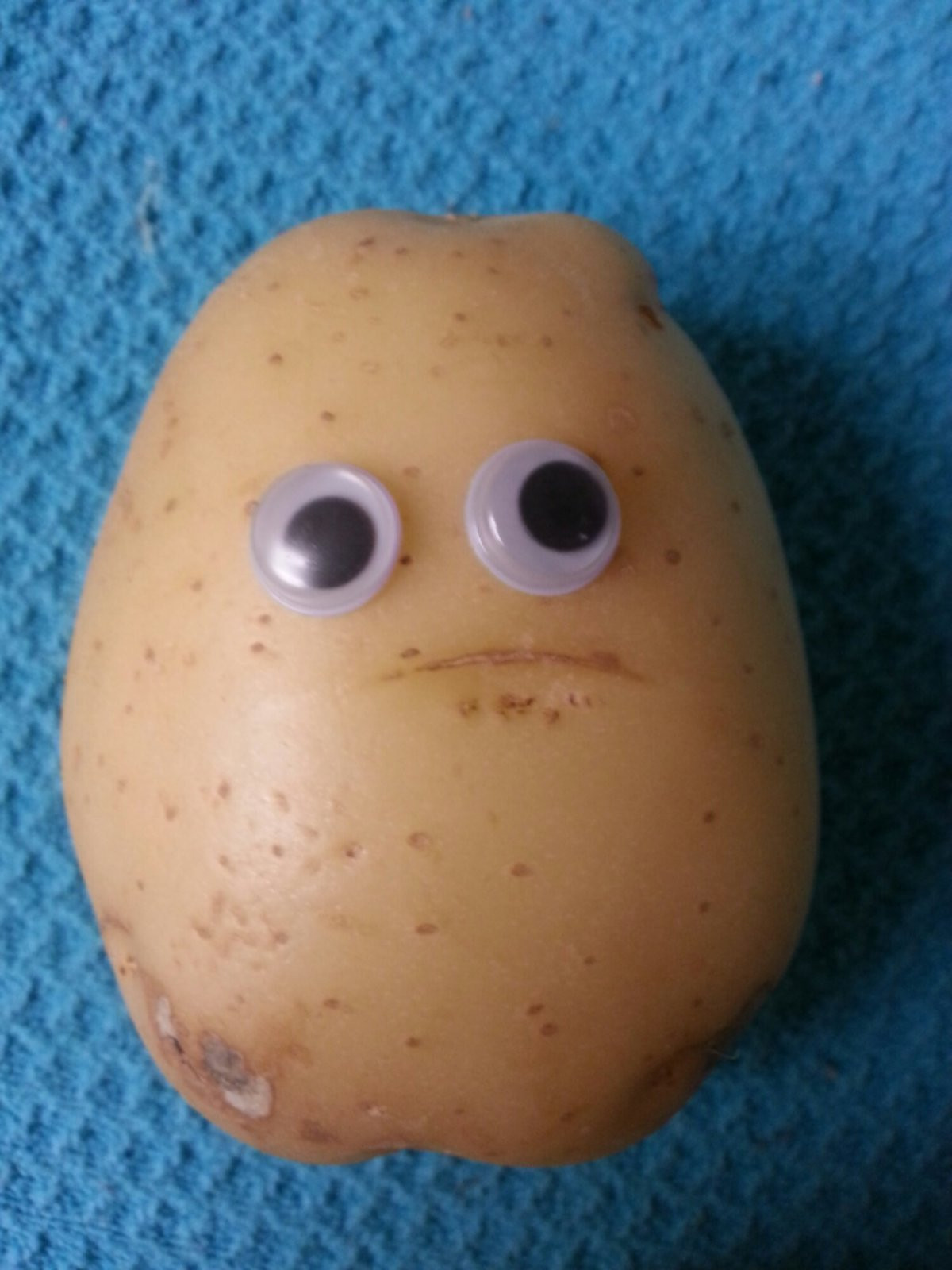 Potato With Eyes  If we didnt have a cat as a mascot what would you have