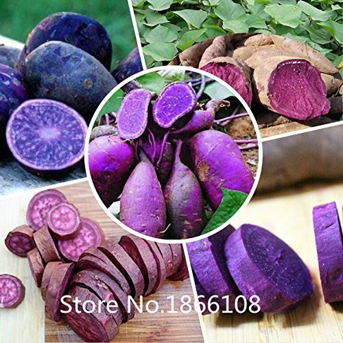 Purple Sweet Potato  Amazon Fresh Purple Sweet Potatoes 2LBS