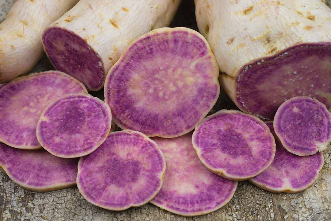Purple Sweet Potato  Reviewing the 2015 Whole Seed Catalog