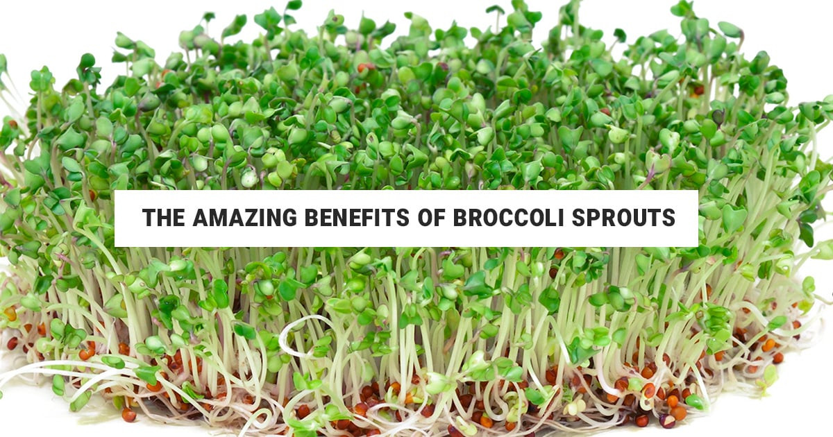 Rhonda Patrick Broccoli Sprouts  The Amazing Broccoli Sprouts Benefits & How To Use Them