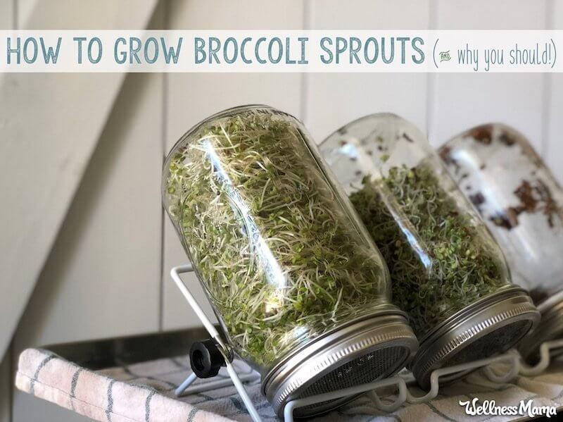 Rhonda Patrick Broccoli Sprouts  How to Grow Broccoli Sprouts & Why We All Should