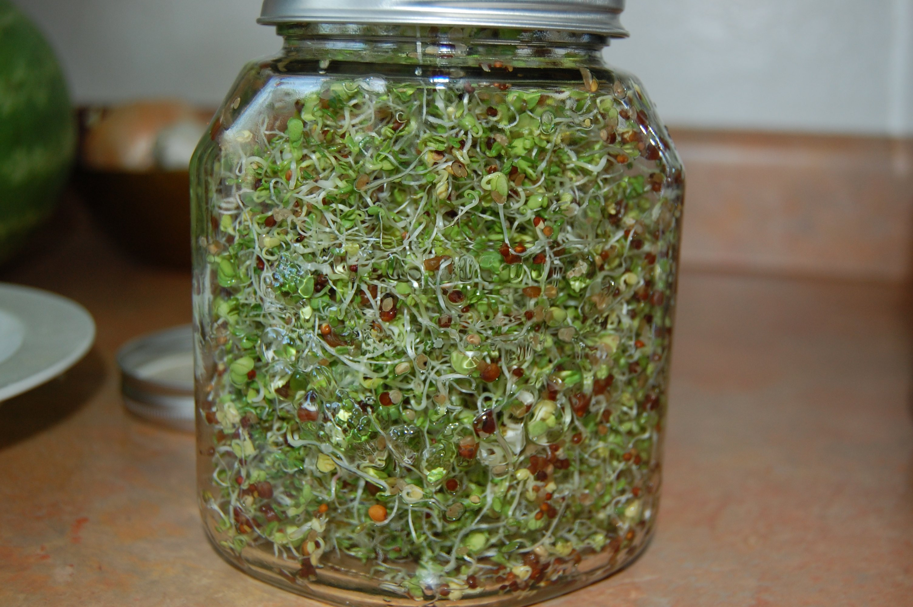 Rhonda Patrick Broccoli Sprouts  The Insane Health Benefits of Broccoli Sprouts and how to