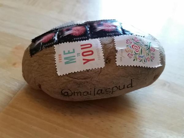 Send A Potato  Send an Unwrapped Potato Through the Mail Pee wee s blog