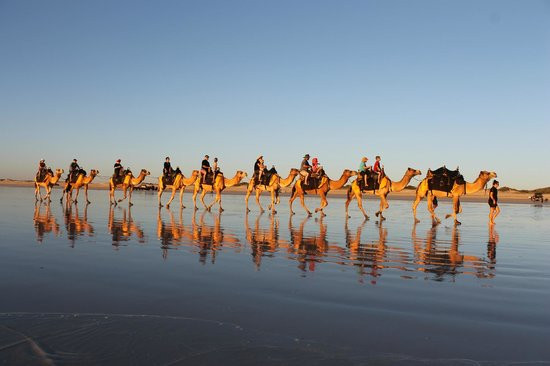 Ships Of The Dessert  布魯姆 澳洲 Ships of the Desert 旅遊景點評論 TripAdvisor