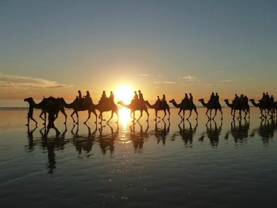 Ships Of The Dessert  The camel s name is Ned Picture of Ships of the