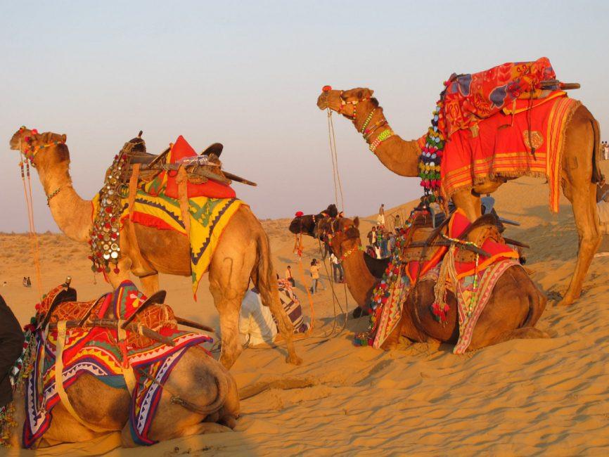Ships Of The Dessert  Celebrating the ships of the desert in Rajasthan