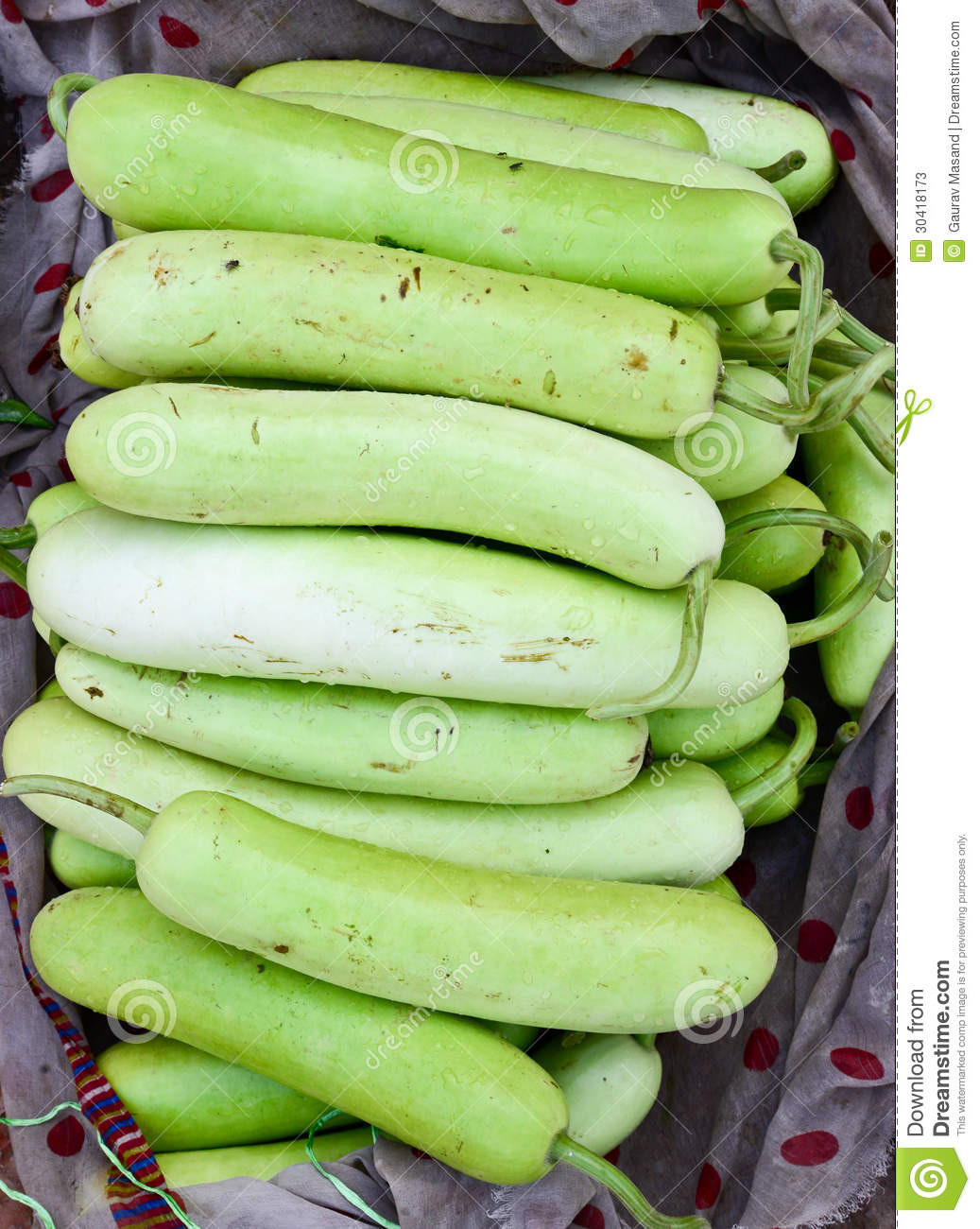 Squash Fruit Or Vegetable  Indian Ve able bottle Gourd Stock s Image