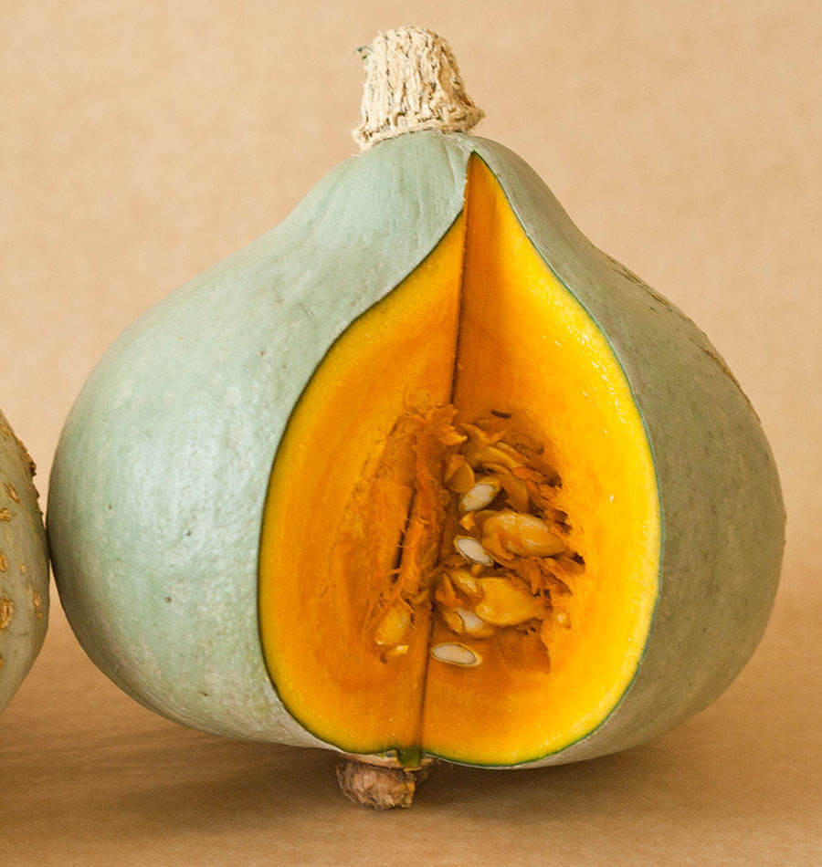 Squash Fruit Or Vegetable  Baby Blue Hubbard squash seeds